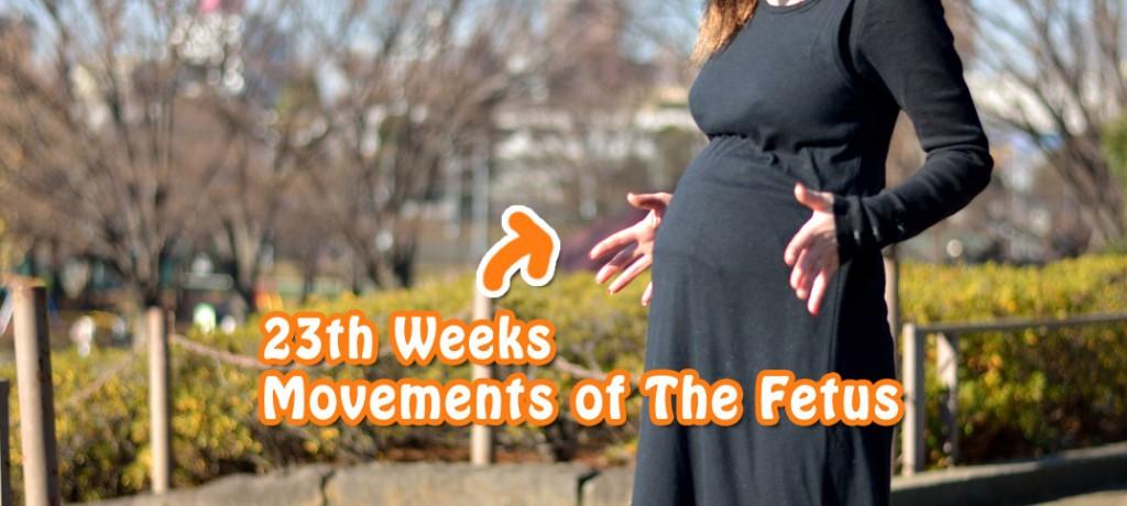 妊娠22週のお腹
