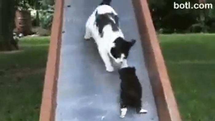 滑り台を降りてくる子猫と、それを拾い上げにくる母親猫。