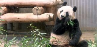 【動画】上野動物園へ行ってきました。祝!生後6ヶ月、ハーフバースデー記念。