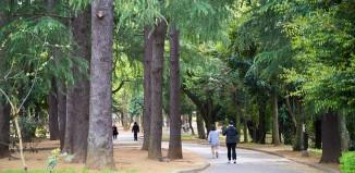 世田谷区で子育てするには、世帯年収800万円は必要。保活でわかった激戦区の実態。