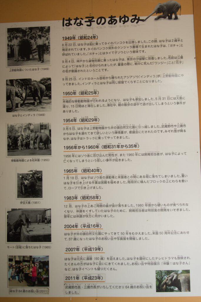 ゾウのはな子さんの歴史(井の頭公園の動物園 / 東京・吉祥寺)