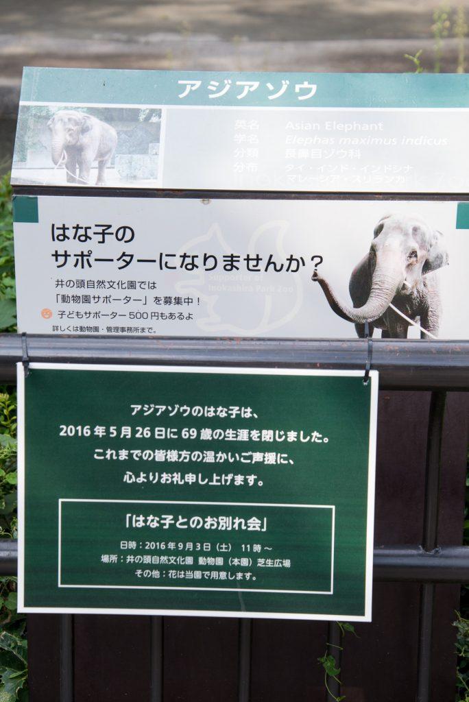 はな子さんとのお別れ会(井の頭公園の動物園 / 東京・吉祥寺)