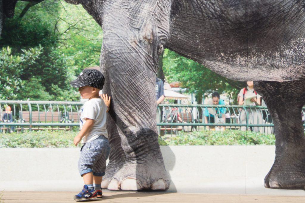 ゾウの足にタッチ(井の頭公園の動物園 / 東京・吉祥寺)