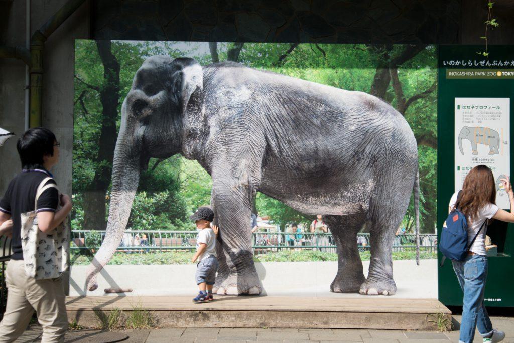 ゾウの実物大パネルの前で写真(井の頭公園の動物園 / 東京・吉祥寺)