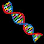 遺伝子(DNA)のイラスト