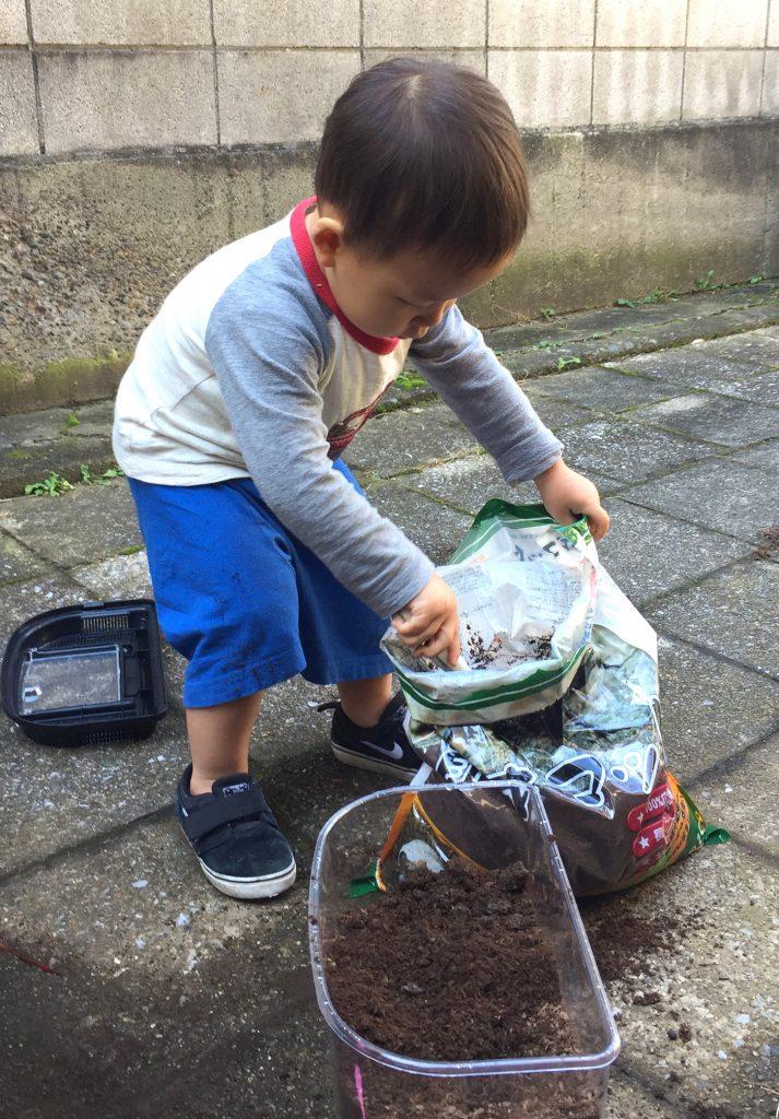 2歳の息子と、カブトムシ幼虫の土を入れ会