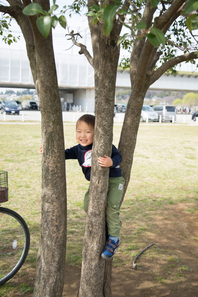 多摩川の河川敷 木登りする子供