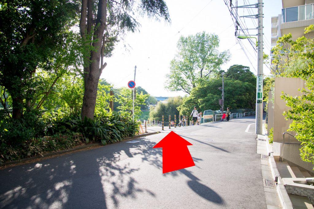 川の入り口 - 二子玉川駅から多摩川駅への道順