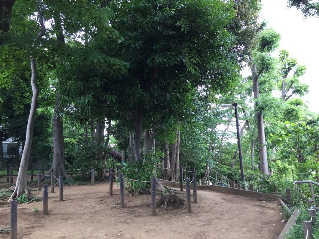 中根公園 生い茂る木々