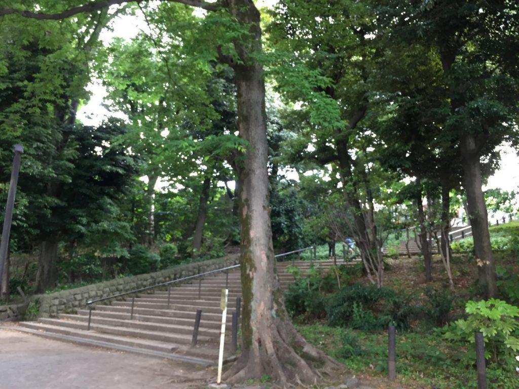 中根公園 自然がたくさん