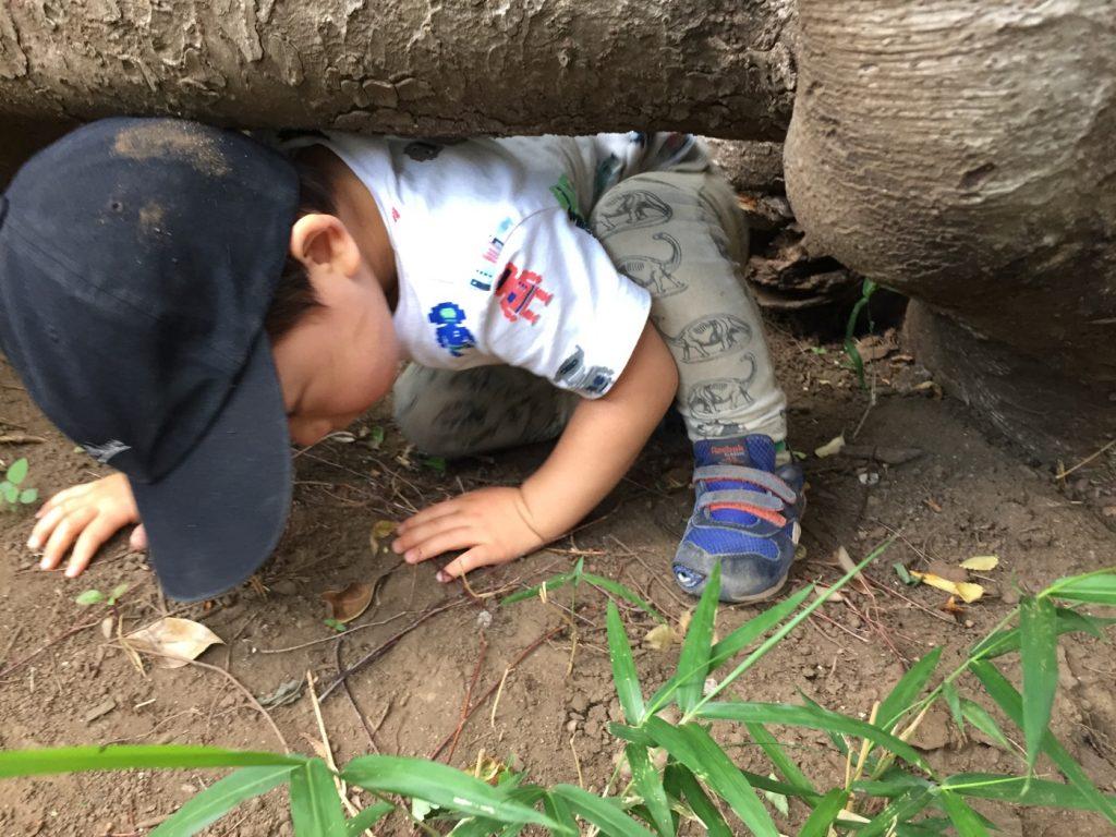 中根公園 木の根のしたをくぐる
