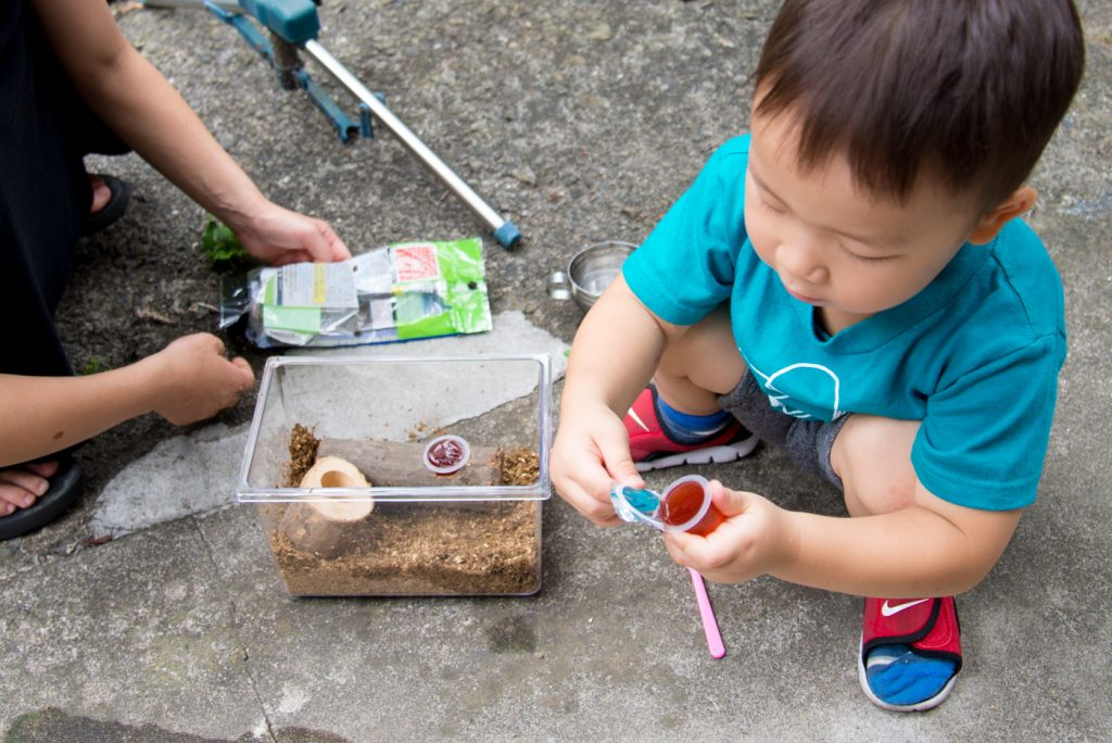 3歳、初めてのカブトムシの飼育(成虫編) 食事は専用のゼリー