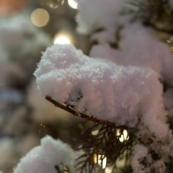 木の上に積もる雪
