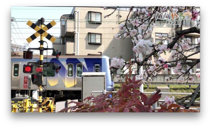 電車と桜と遮断機