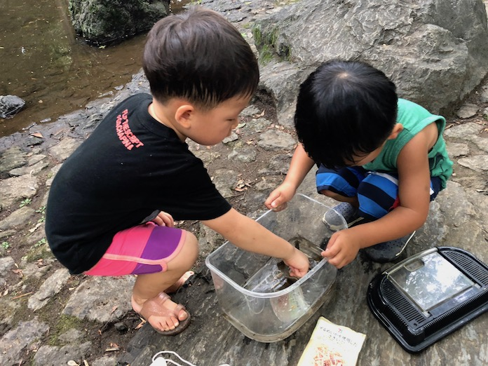 駒場野公園でつかまえたザリガニを水槽に入れて、それを眺める子どもたち