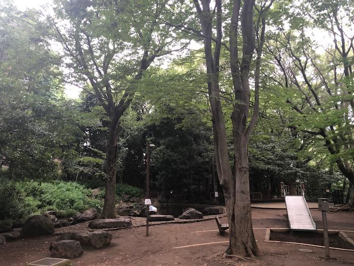 駒場野公園の森