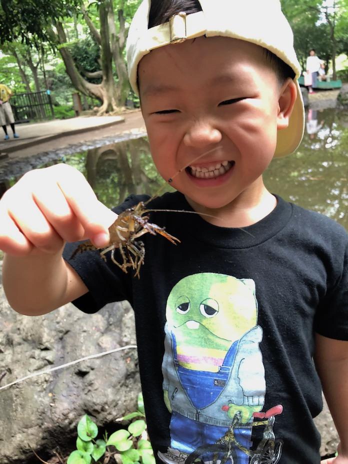 駒場野公園でザリガニを手づかみする4歳の男の子