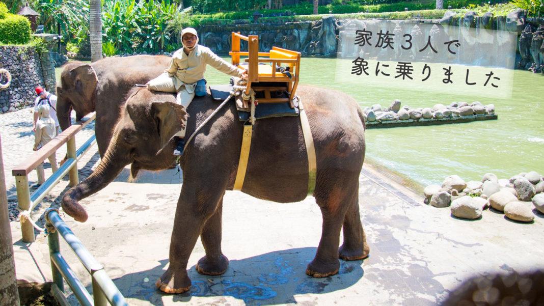 バリズーの象。背中に木製の椅子が備え付けられています。