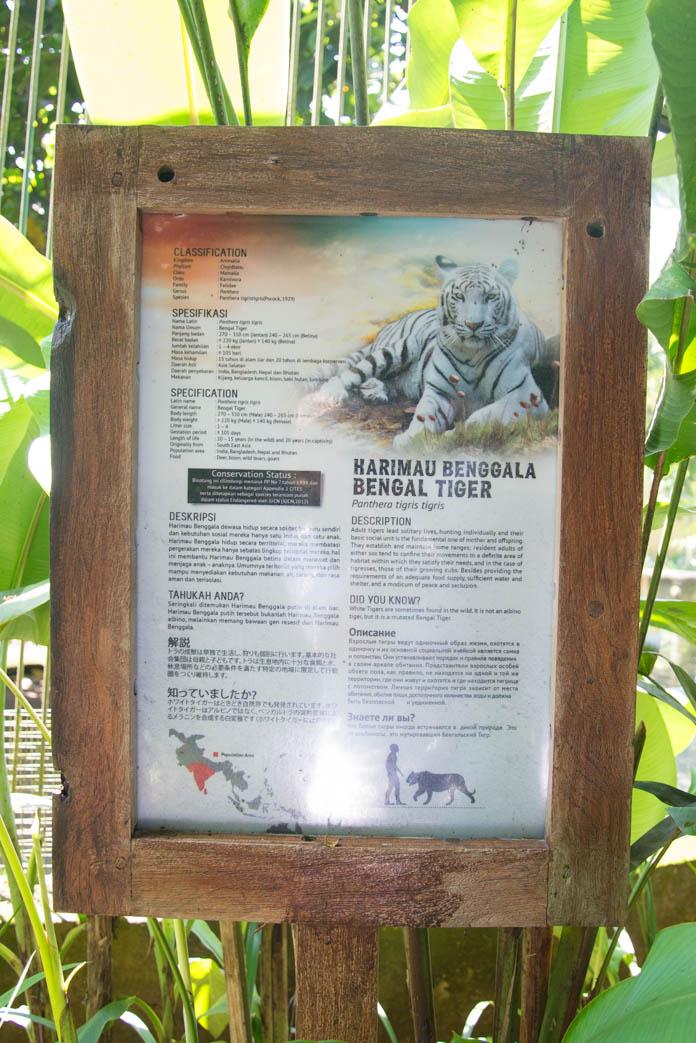 Bali Zoo(バリ動物園)ホワイトタイガーの説明看板
