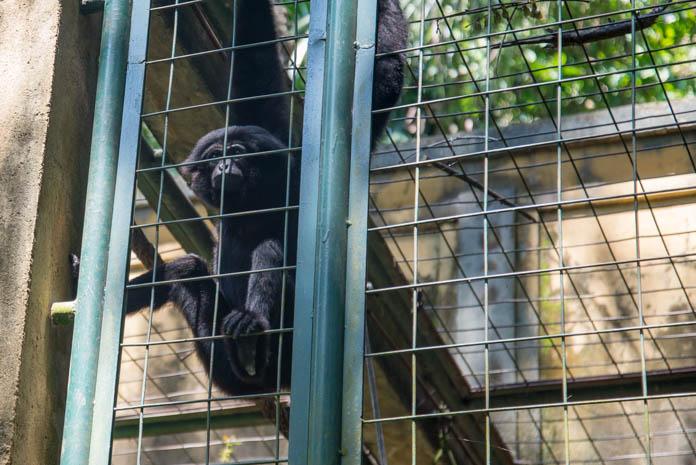 Bali Zoo(バリ動物園)猿