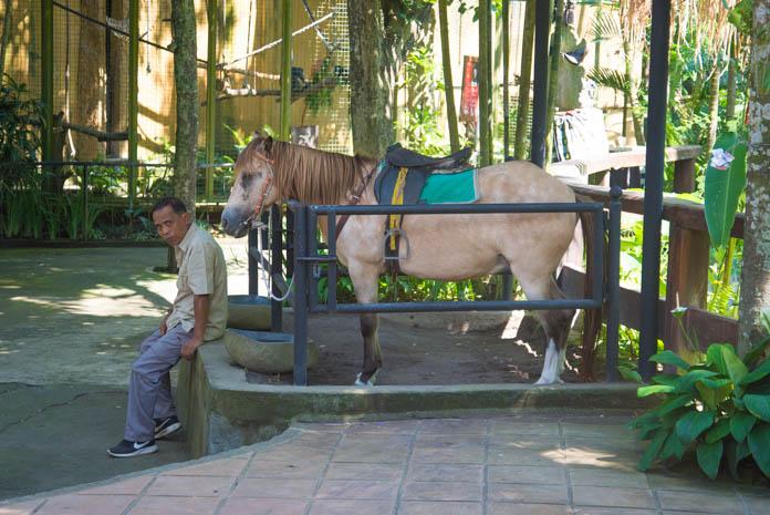 Bali Zoo(バリ動物園)馬