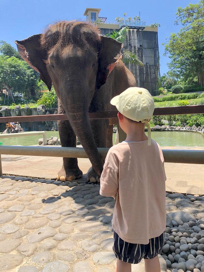 Bali Zoo(バリ動物園)象と子ども