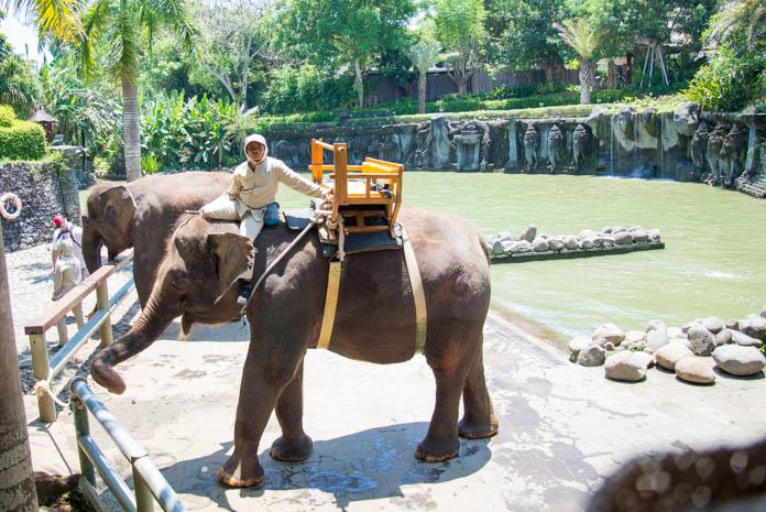 Bali Zoo(バリ動物園)象