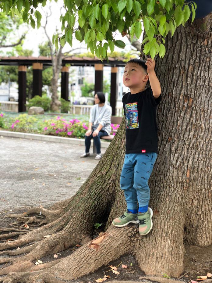 木登り(衾町公園)
