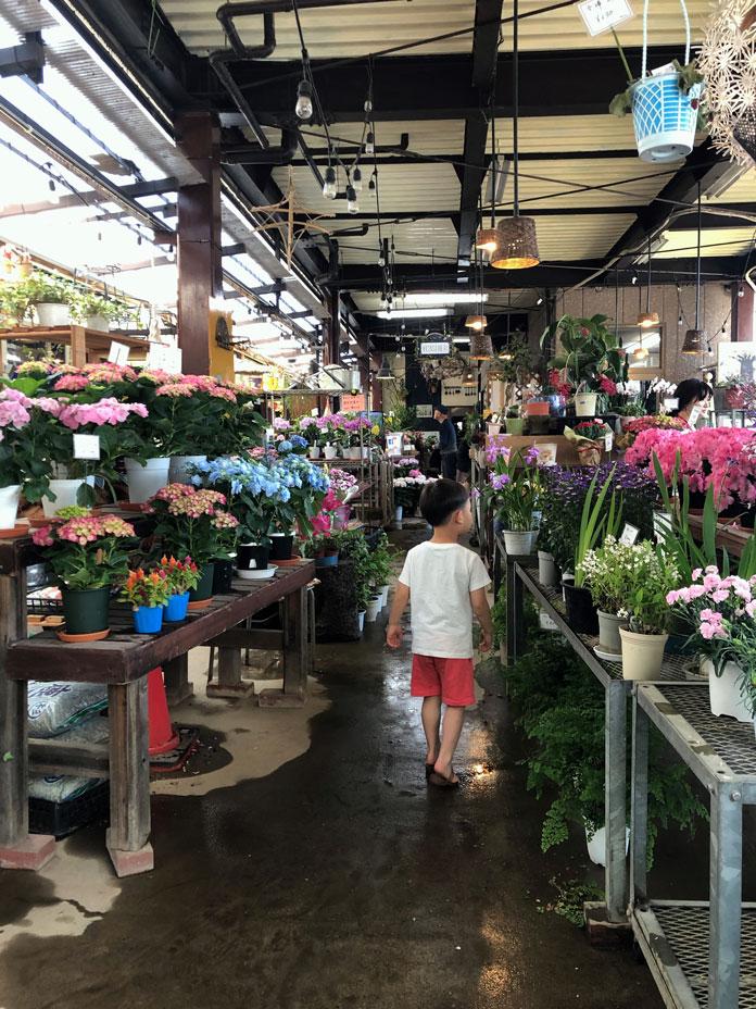 花屋さんの店内で花を選ぶ5歳の子ども