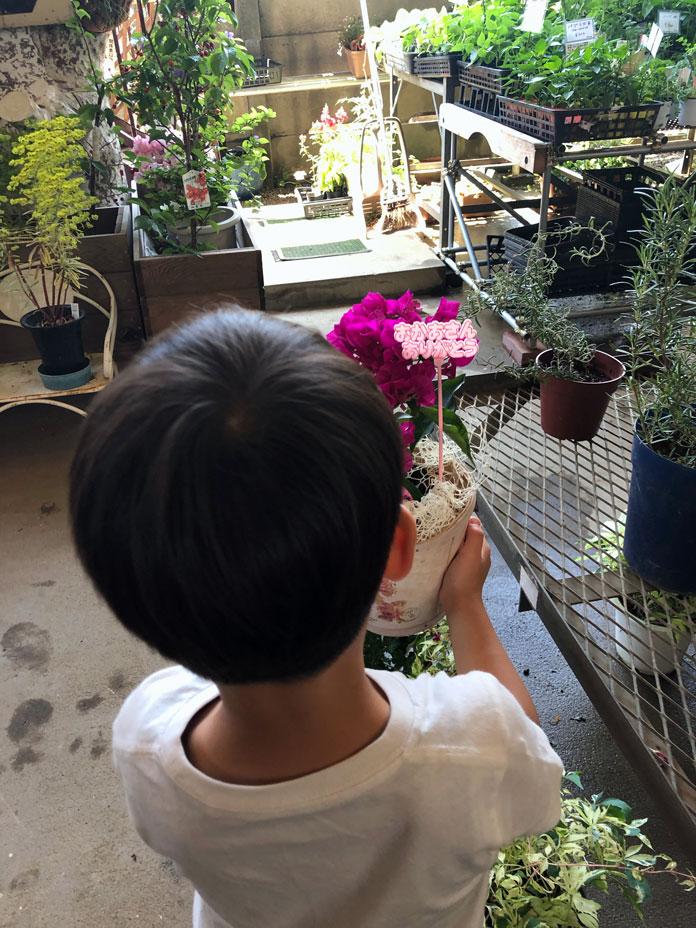 ブーゲンビリアの鉢植えを持つ5歳の子ども