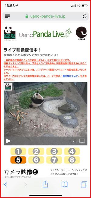 上野動物園、パンダのライブ配信