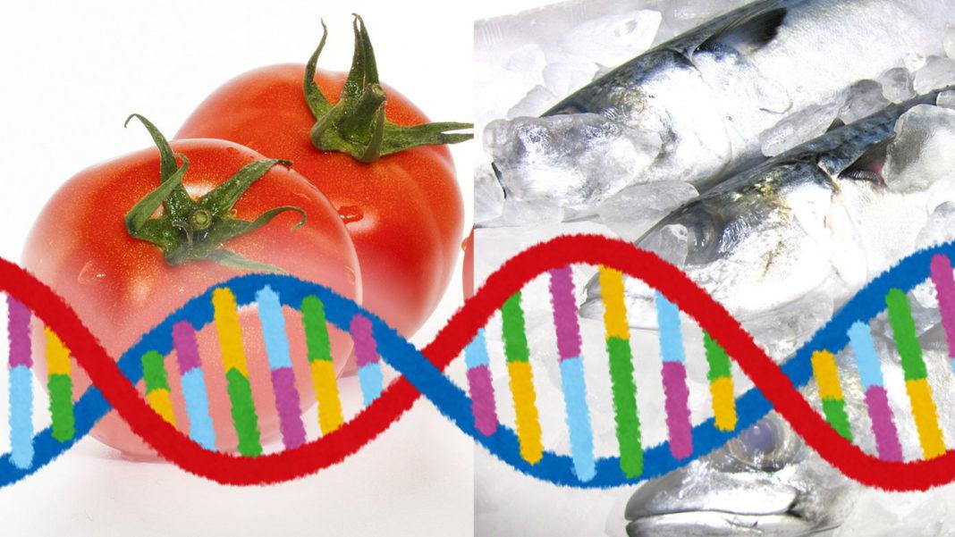 ゲノム編集食品 トマト、サバ
