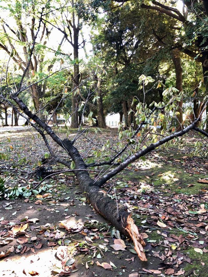 台風で折れた大きな枝