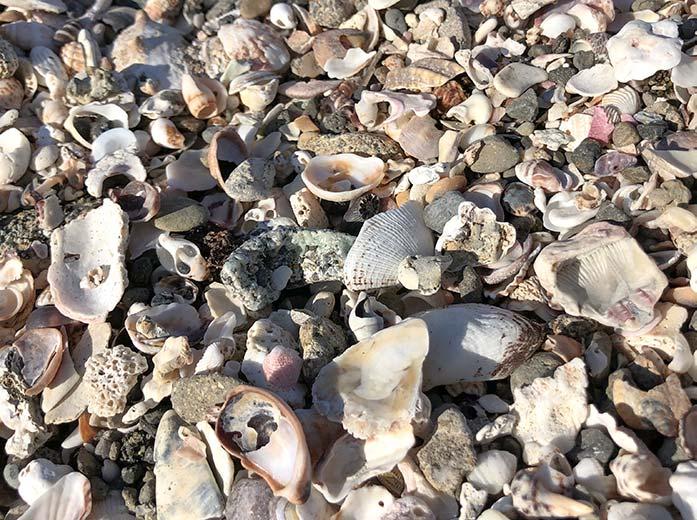 砂浜に広がる貝殻
