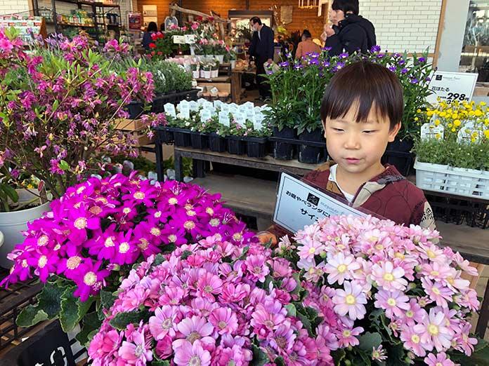 花売り場で花を選ぶ5歳の息子