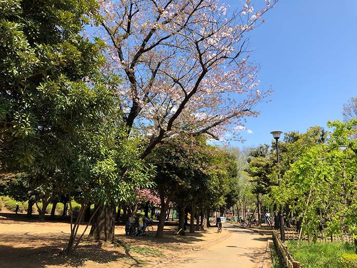 新型コロナウイルス、緊急事態宣言発令中の世田谷公園の散歩道