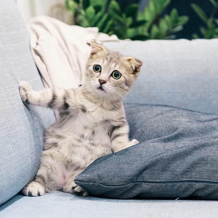 ラブリーな子猫