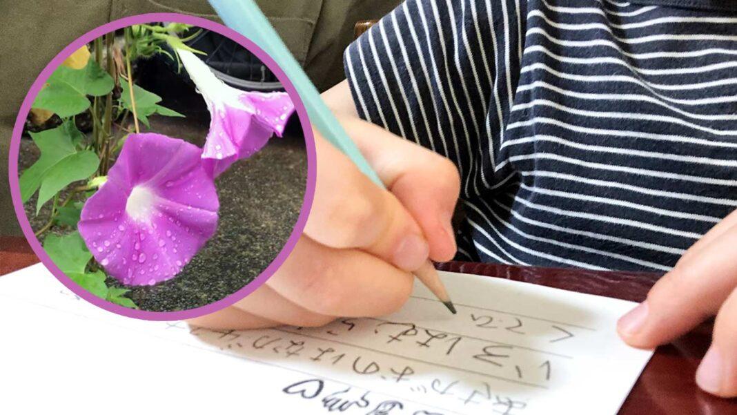 朝顔の観察日記を書いている小学1年生